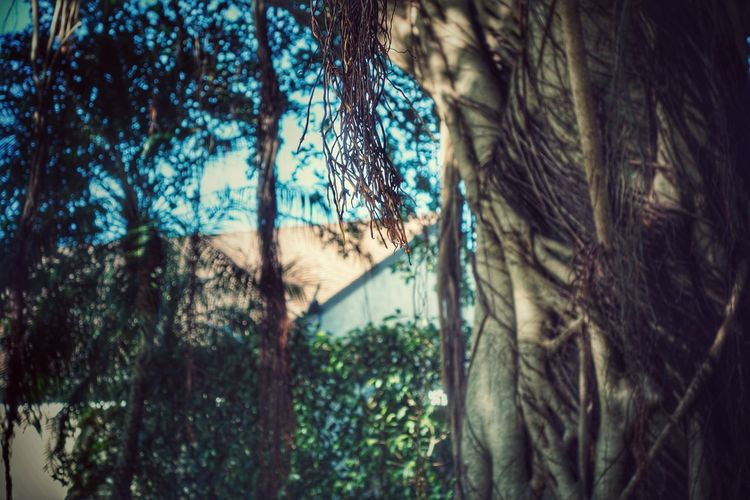 Tree Behind The House Beauty In Nature Tree Trunk Outdoors Growth Tranquility No People Plant Tree Branch Moss