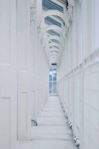 White Architecture Building Building Interior Copy Space Kew Gardens Royal Botanic Gardens The Way Forward Direction Diminishing Perspective Footpath vanishing point Architectural Column Arch Ceiling Narrow Indoors  Corridor Colonnade Arcade In A Row My Best Photo 17.62°