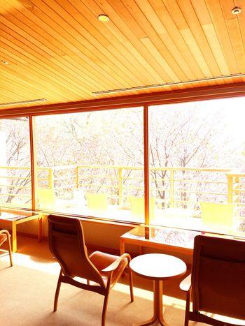 Japan Hokkaido Shikotsu Lake Cherry Blossoms Hotspring Tea Time Relaxing
