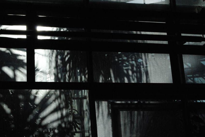 Window Indoors  Tree Nature Shadow Palm Tree