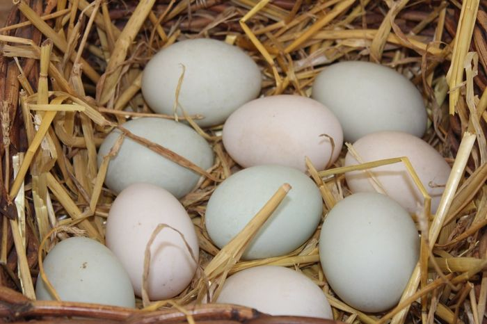 EyeEm Selects Egg Animal Egg Beginnings Fragility New Life Bird Nest Food And Drink Food High Angle View Hay Eggshell Straw No People Close-up Day Indoors  Healthy Eating Nature Freshness