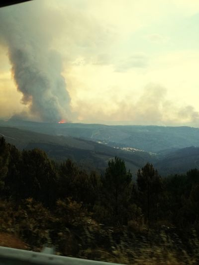 Tree Accidents And Disasters Outdoors Forest Nature Mountain Forest Fire CaosHelp Our Planet Environment Portugal Incêndiosflorestaisdeportugal2017 RedCrossExperience
