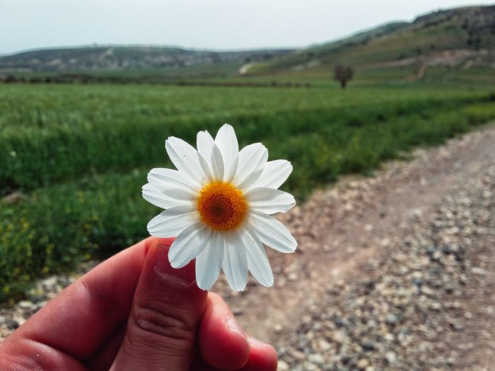 Papatyalaa Human Hand Human Body Part Flower One Person Holding Personal Perspective Nature Focus On Foreground Field Close-up Outdoors Day Lifestyles Beauty In Nature Flower Head Real People People Adult Landscape Fragility Hanging Out Turkey First Eyeem Photo Nature Travel