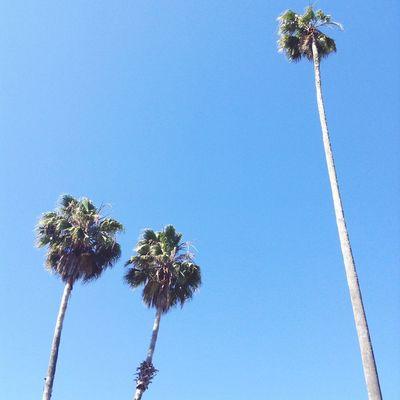 Palm Tree Tropical Climate Sky Low Angle View Plant Tree Tall - High