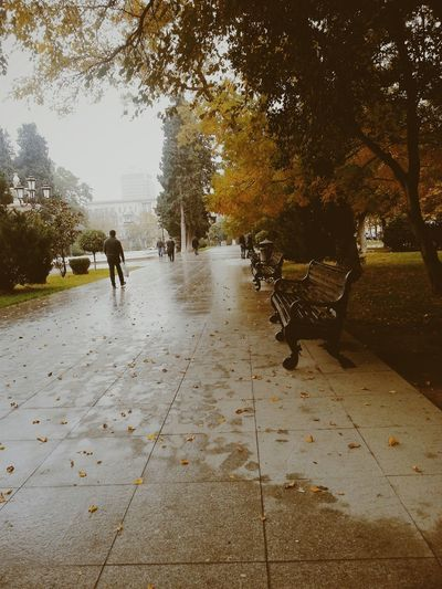Autumn Colors Rainy Day Waiting ...