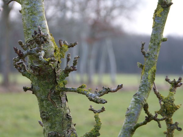 apple tree wonder ... :-) Apple Tree Apple Trees Garden Barks Of A Tree Beauty In Nature Branch Branch Of A Tree Close-up Day Focus On Foreground Fruit Garden Growth Mossy Tree Nature Nature Photography No People Outdoors Tree Tree Art Tree Beauty Tree Nature Growth Outdoors No People Day Tranquility Forest Tranquil Scene Beauty In Nature Scenics Multi Colored Nature_collection Nature Photography Nature Tree Trunk Tree World Treebranch Winter Tree Wintertime