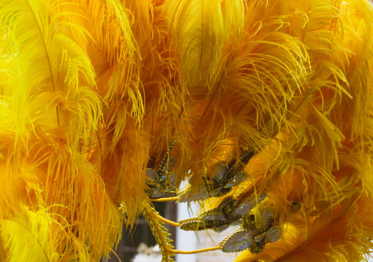 Feather  Yellow Colorful Close-up