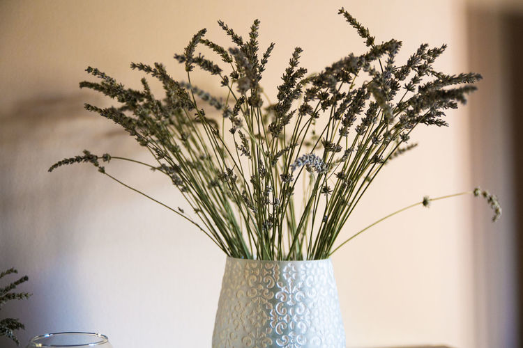 Morning moments Flower Home Home Interior Home Is Where The Art Is Homesweethome House Lavander Morning Morning Light Morning Rituals Rituals Style