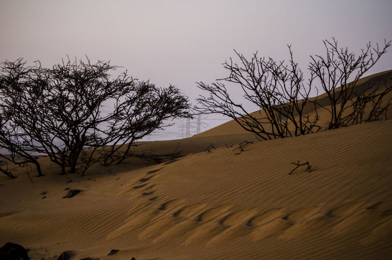 Desert walk Sand Scenics - Nature Land Landscape Tranquility Sky Tranquil Scene Environment Desert Sand Dune Beauty In Nature Tree Climate Non-urban Scene Nature Bare Tree Arid Climate Plant No People Remote Atmospheric