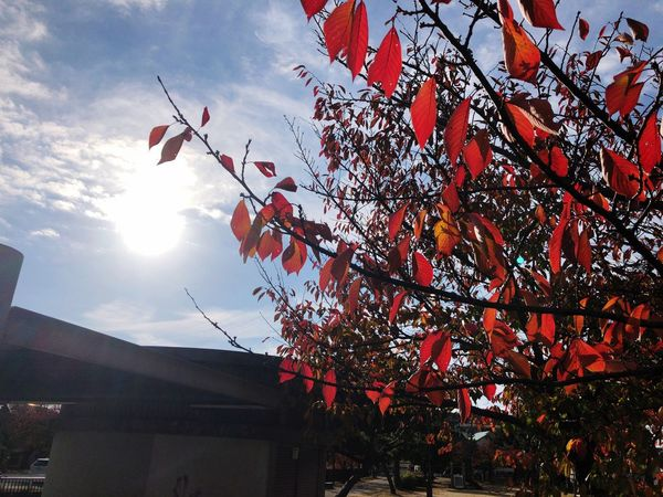 Autumn colors Autumn Light And Shadow City Street New Day IPhoneX Autumn🍁🍁🍁 Streetphotography IPhone Japan Photography Sky Low Angle View Nature Tree No People Sunlight Cloud - Sky Building Exterior Decoration Branch Architecture Outdoors Plant Built Structure Beauty In Nature Day Growth Plant Part Leaf Hanging