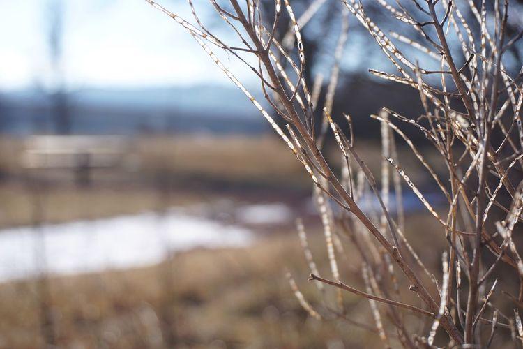 Showcase: February Alberta Canada EyeEm Best Shots Welcomeweekly Branches Dry Grass Winter Winter Bushes Macro Macro_collection