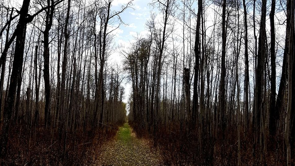 path EyeEmNewHere Relaxing Reflection Peaceful Trees Woods Grass Leaves Autumn Fall Alberta Canada Hike Growth Tree No People Day Nature Backgrounds Outdoors Full Frame Beauty In Nature Sky Close-up