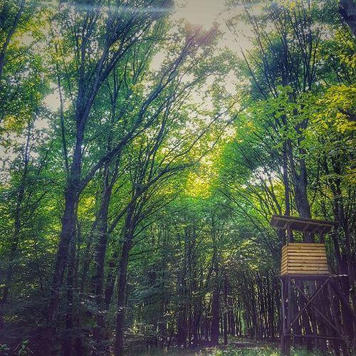 Hunterstower Hunterlodge Hunting Intothewoods Hideandseek Findingnemo Summertime Slovenija Slovenia Prekmurje