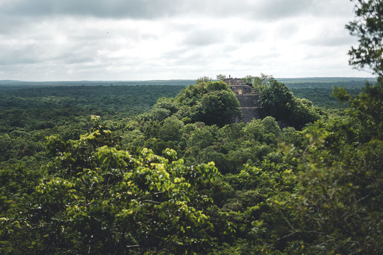 Plant Tree Sky Cloud - Sky Environment Growth Green Color Nature Scenics - Nature Landscape Architecture No People Day History Beauty In Nature Land The Past Outdoors Built Structure Foliage Jungle Rainforest Mexico Mayan Ruins