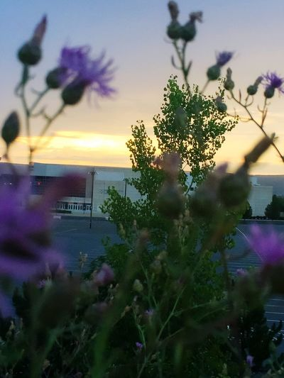 Outandabout Nature_collection Nature Parking Lot Sun Sunset Wilkes-Barre Wilkesbarre Pennsylvania Landscape Landscape_Collection Urban Selective Focus Beautiful