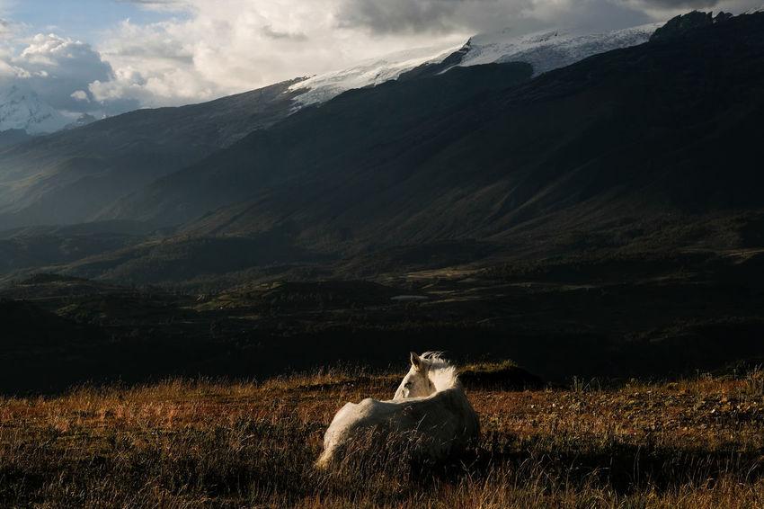 Huaraz, 2018 The Great Outdoors - 2018 EyeEm Awards Animal Animal Themes Beauty In Nature Landscape Mountain Mountain Range One Animal Scenics - Nature Sky