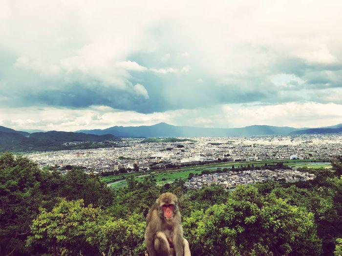 Macaque Japan Kyoto