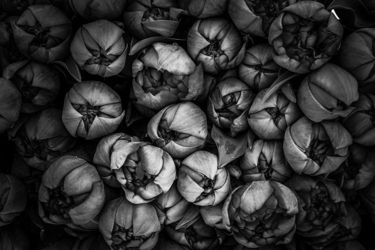 Gull frame shot of tulip flowers