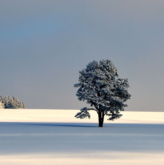 EyeEmNewHere Winter Beauty In Nature Branch Clear Sky Cold Temperature Day Firstshot Germany Growth Landscape Lone Nature No People Olefingirl Outdoors Scenics Silence Sky Snow Tranquil Scene Tranquility Tree White Winter First Eyeem Photo