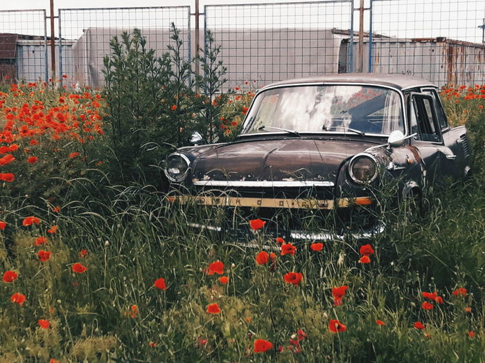 No People Outdoors Master_shots EyeEm Masterclass EyeEm Best Shots Tranquility Scene Close-up Tranquil Scene Masterclass Full Frame EyeEm Best Edits EyeEmNewHere Full Length Conceptual Photography  Freshness Visual Inspiration Flower Day Growth Old-fashioned Old Car Retro Retro Styled Retrospective Retrocar Live For The Story The Photojournalist - 2017 EyeEm Awards Place Of Heart Out Of The Box