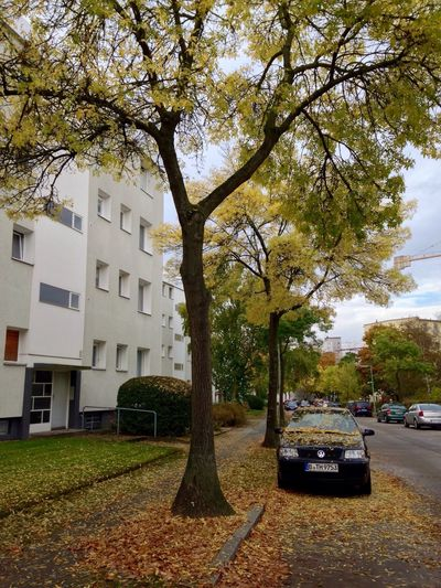 Hugging A Tree Autumn EyeEm Best Shots Beautiful Nature
