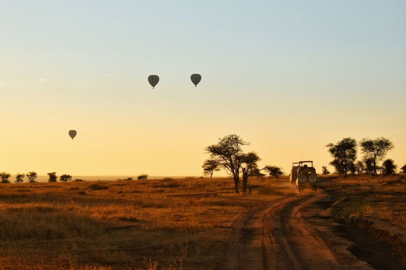 Endless Plains EyeEm Nature Lover EyeEmNewHere Travel Travel Destinations Seetheworld  Safari Hot Air Balloon Tree Sunset Flying Silhouette Mid-air Sky Grass Landscape Dawn