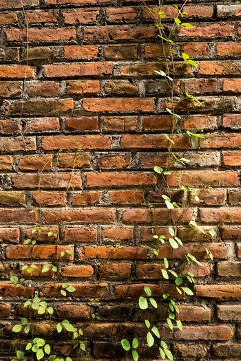 Close-up of brick wall