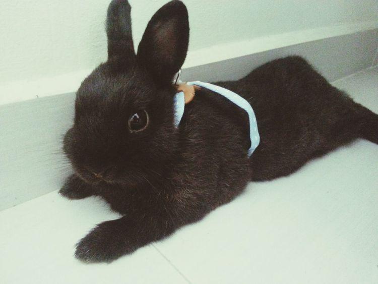 Precious. Petstagram Bunny