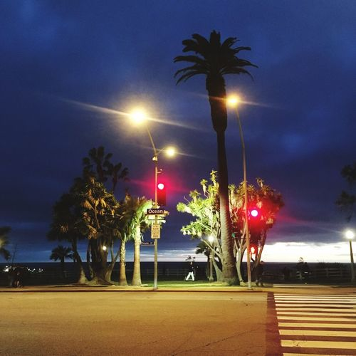 Illuminated street light and palm trees against sky at night