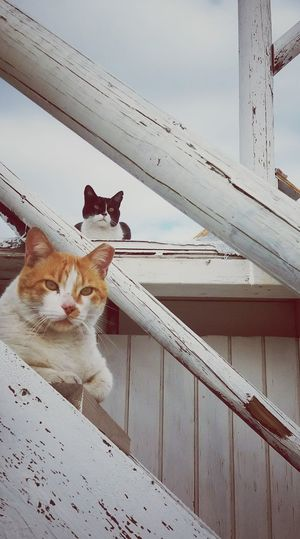Taking Photos Popular Photos Animals Animal_collection Animal Themes Animal Photography Cats Cat Lovers Catoftheday Cats Of EyeEm Cat Watching