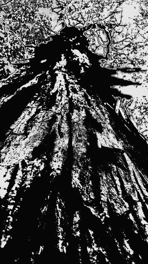 No People Tree ArtWork Black & White Outdoors Log Forestry Industry Wood - Material Growth Forest Nature Leaf Beauty In Nature Close-up