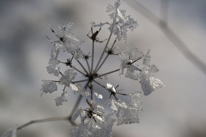 Beauty In Nature Close-up Cold Temperature Day Frozen Ice Ice Cristal Outdoors Snowflake Winter