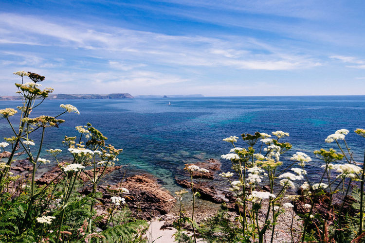 Seascape Photography Bay Beauty In Nature Blue Cloud - Sky Cornwall Cornwall Uk Day Flower Flowering Plant Growth Horizon Horizon Over Water Land Nature No People Outdoors Plant Scenics - Nature Sea Seascape Sky Tranquil Scene Tranquility Water