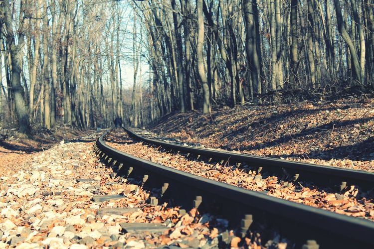 Railroad Track Tree Rail Transportation Nature Forest Day Autumn Transportation Leaf Tranquility Outdoors Scenics Beauty In Nature Forest Trail Forest Train Canon Eos1100D RebelT3 Hiking Walking In The Woods