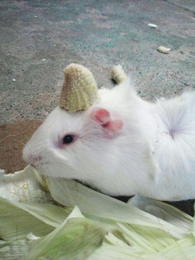 this is my Unicorn ♥♥ Pets Animals Coballo Chile