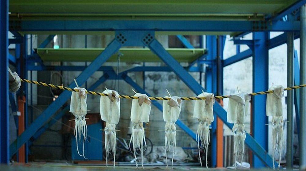 Drying squid in Busan, South Korea. Street Photography Squid ❤ EyeEm Best Shots Busan,Korea Eyeem Streetphotography