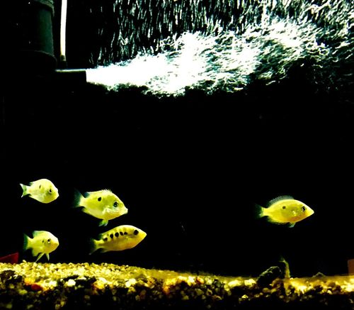 Water Underwater Aquarium Fish Aqua Zoo School Of Fish Fish Tank Fish Photography Gallery Aquarium Life Aqua Aqua Park Aqua Life Aqua Color Aqua Garden EyeEmNewHere