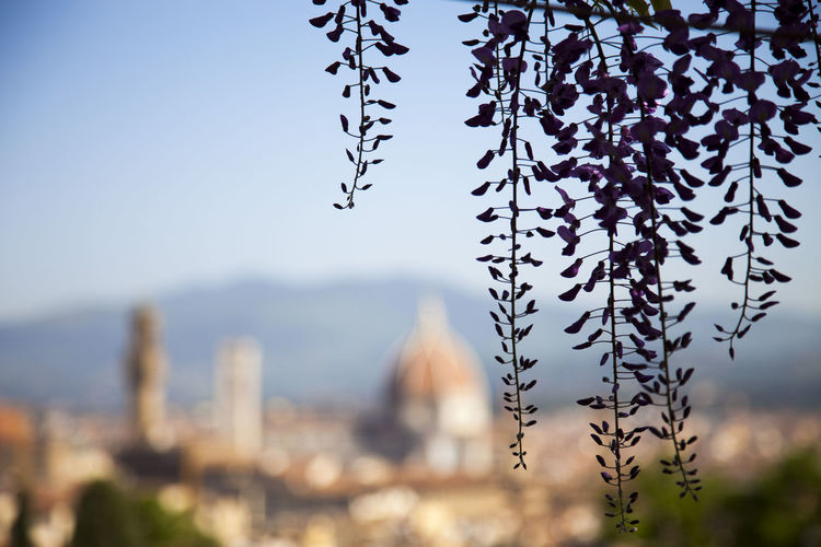The Bardini garden Architecture Beauty In Nature Building Exterior Built Structure City Close-up Day Focus On Foreground Fragility Growth Mountain Nature No People Outdoors Plant Selective Focus Sky Tranquility Tree Vulnerability