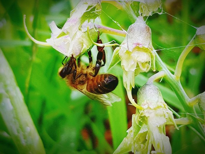 Insect Animals In The Wild Animal Themes Spider Animal Wildlife One Animal Spider Web Close-up Nature Focus On Foreground Leaf No People Plant Day Animal Leg Outdoors Fragility My Front Garden Freshness Beauty In Nature Bee Plant Nature