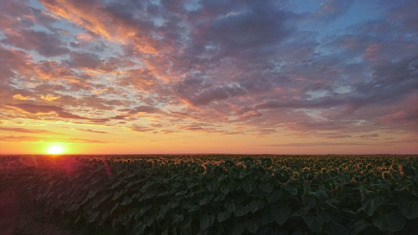 Sunrise in Romania Sunrisesunflowers First Eyeem Photo