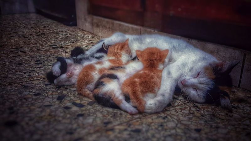 Kitty Cat Love Mother Nature EyeEm Best Shots Enjoying Life Colorful Hdr_Collection HDR Snapssed Lightoom That's Me Colour Of Life Colors momy kitty 🐱😻💙❤️