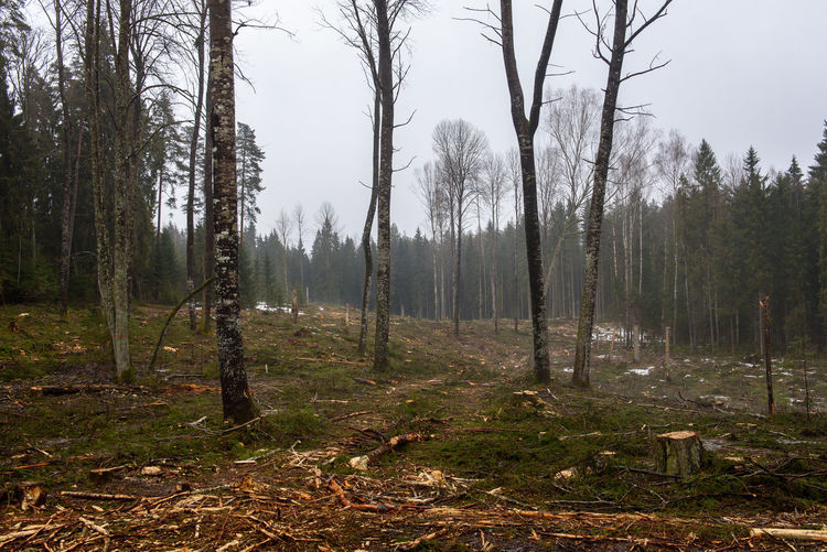 Tree cutting in forest. Wooden materials. Forestry industry. Business Forestry Industry Tree Tree Cutting In Forest Wood Care For Nature Environment Forest Tree Cut Tree Cutting Wooden