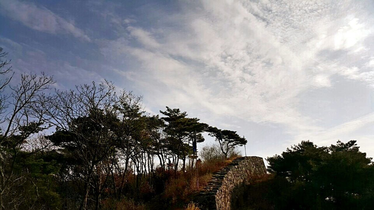 tree, cloud - sky, no people, nature, outdoors, landscape, sky, pinaceae, pine tree, growth, day, forest, scenics, beauty in nature