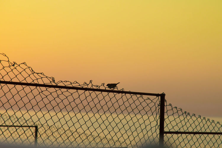Chainlink fence against clear sky during sunset