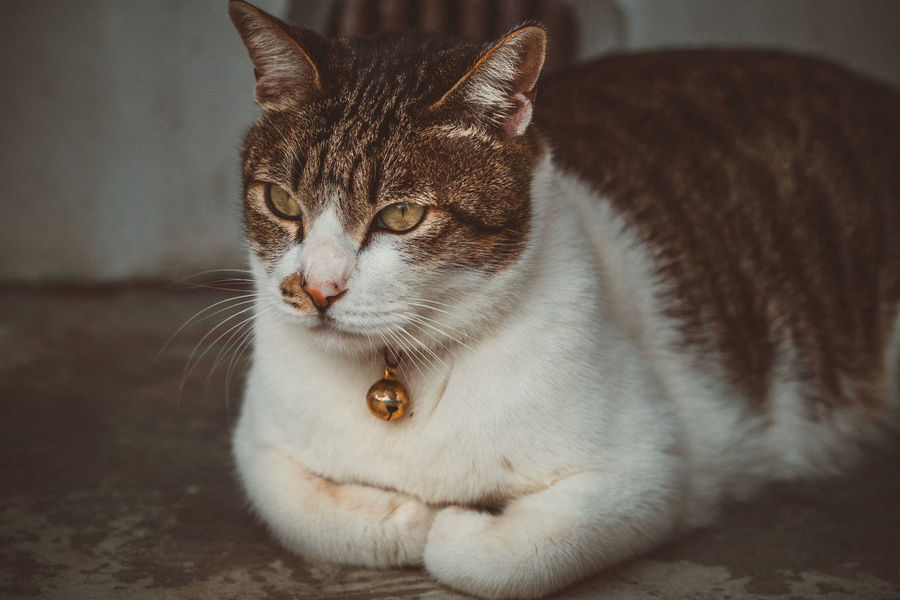 Lost in Houtong cat village, New Taipei City Animal Themes Cat Cat Village Close-up Day Domestic Animals Domestic Cat Feline Houtong Cat Village Indoors  Mammal New TaipeiCity No People One Animal Pets Portrait Taipei Taiwan Whisker