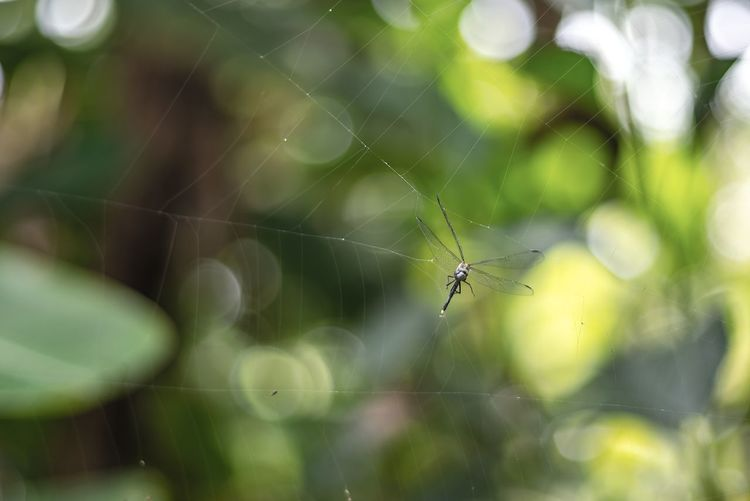 Gets caught in spider web Spider Animal Animal Leg Animal Themes Animal Wildlife Animals In The Wild Arachnid Arthropod Close-up Day Focus On Foreground Fragility Insect Invertebrate Nature No People One Animal Outdoors Selective Focus Spider Spider Web Vulnerability  Web