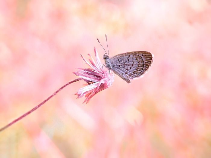 Insect Nature No People Animals In The Wild Pink Color Outdoors Close-up Beauty In Nature Fragility Flower Day Animal Themes Sky