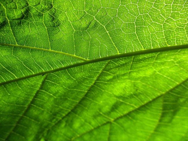 Leaf Green Color Nature Growth Backgrounds No People Close-up Day Plant Freshness Fragility Beauty In Nature Outdoors Water Nature Sky Tree Photoart Picture Frame Photograph Photography Themes Thailand🇹🇭