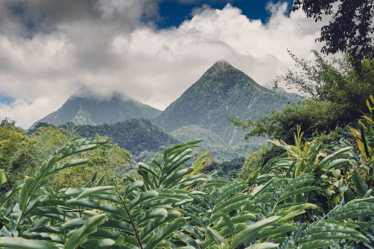 Montagne Pelée, Martinique Montagne Pelée Beauty In Nature Cloud - Sky Day Environment Green Color Growth Landscape Mountain Mountain Peak Mountain Range Nature No People Non-urban Scene Outdoors Plant Scenics - Nature Sky Tranquil Scene Tranquility Tree