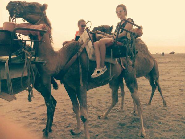 Camello Almeria Summertime